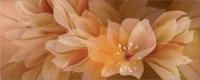 Zalakerámia Elegance FIORE F-53001 dekorcsempe